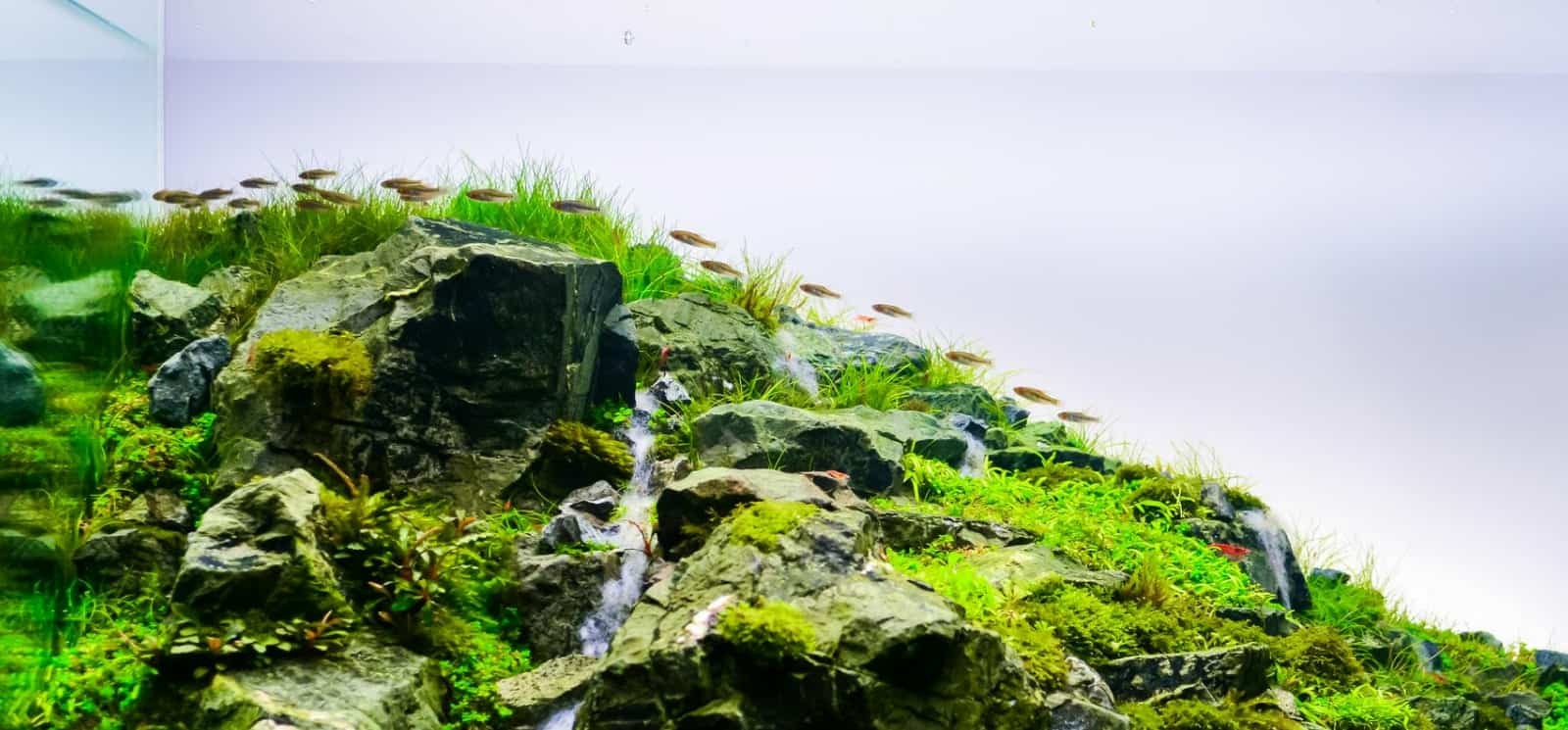 Aquascape Iwagumi Beginner's Guide