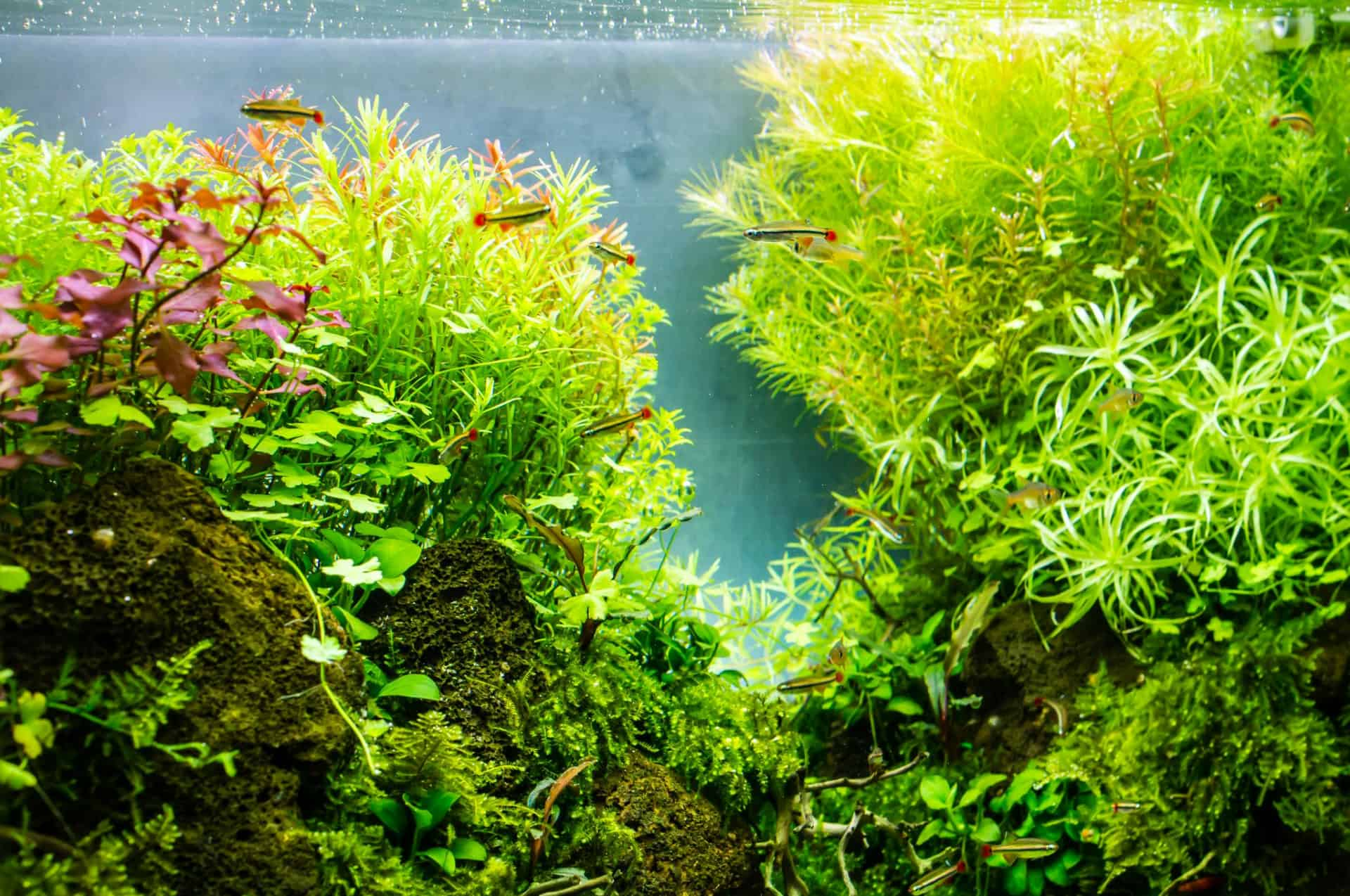 Low Light Aquarium Plants, Cost-Effective and Easy to Maintain
