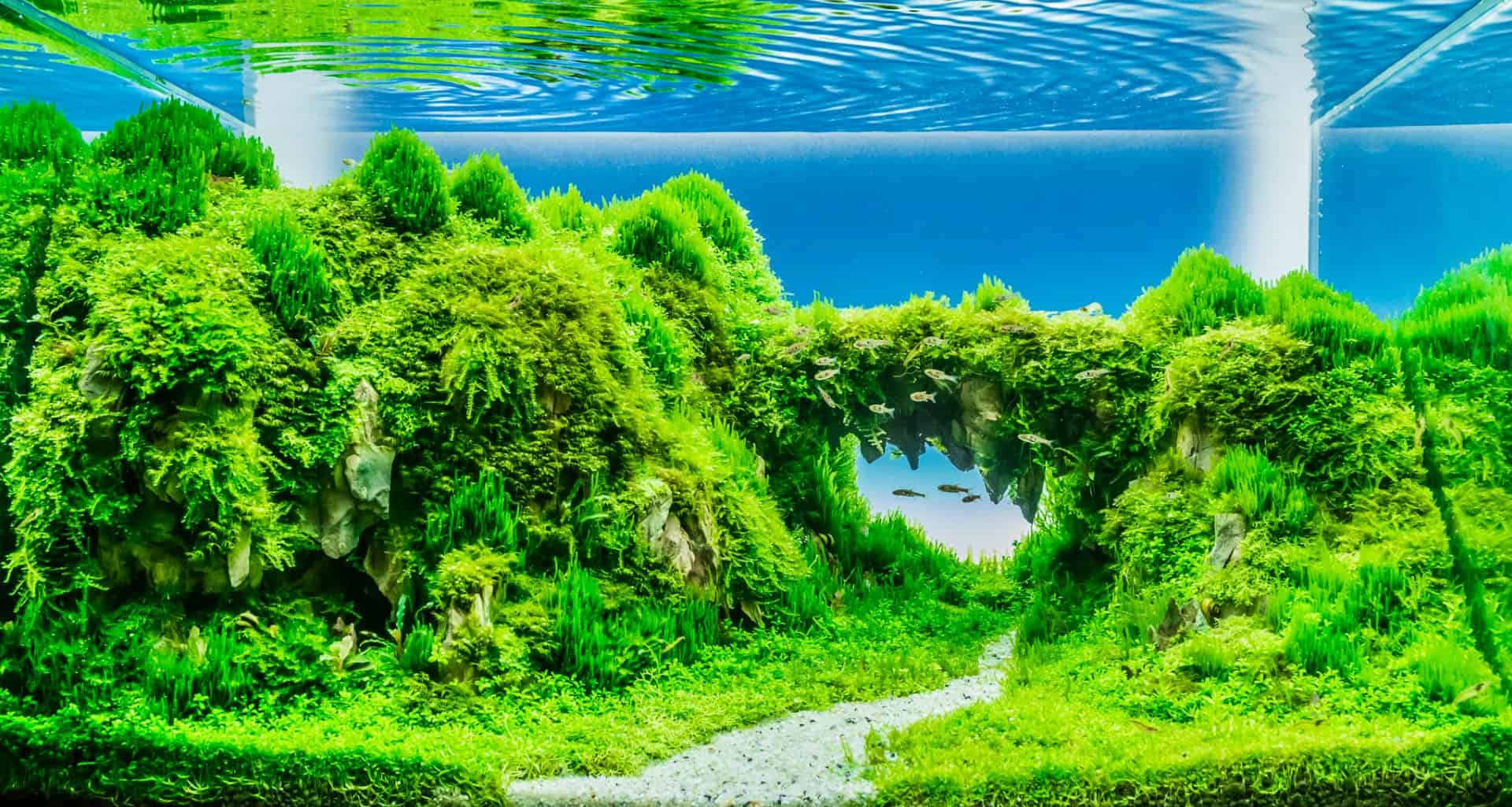 Best Aquarium Carpet Plants Year Aquascape Guru